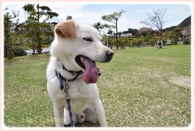 f:id:yasukazu01:20150408224546j:image