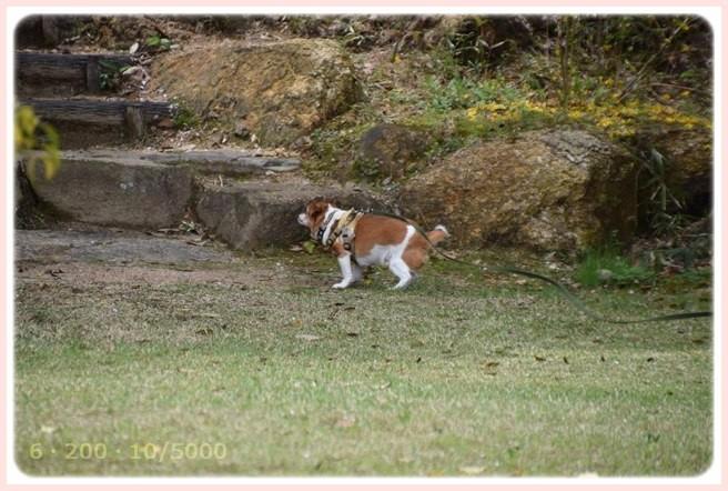 f:id:yasukazu01:20150408224715j:image