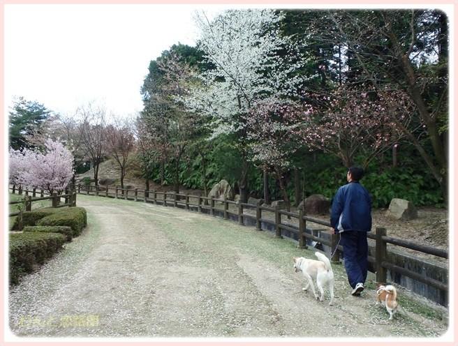 f:id:yasukazu01:20150409224655j:image