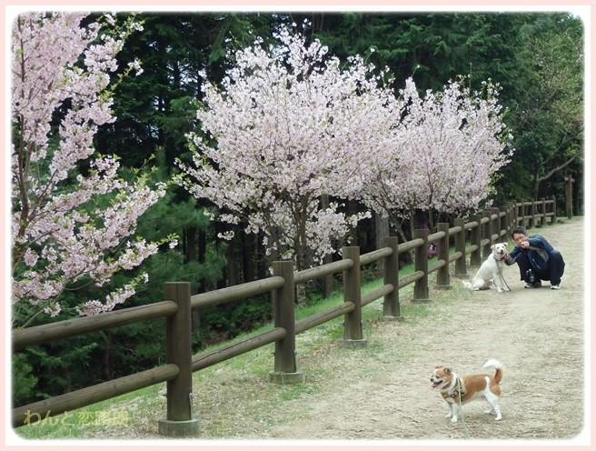 f:id:yasukazu01:20150409224759j:image