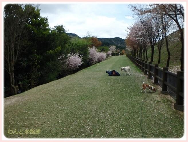 f:id:yasukazu01:20150409225021j:image