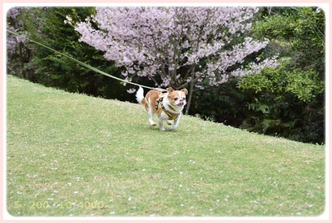 f:id:yasukazu01:20150409225203j:image