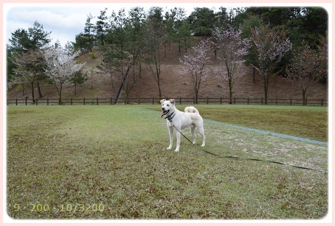 f:id:yasukazu01:20150410230935j:image