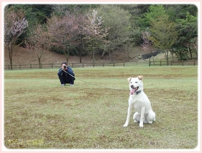 f:id:yasukazu01:20150410231204j:image