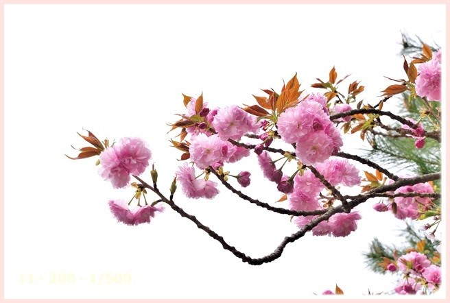 f:id:yasukazu01:20150410231441j:image
