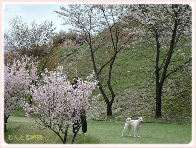 f:id:yasukazu01:20150411194903j:image