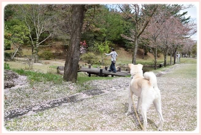 f:id:yasukazu01:20150411195821j:image