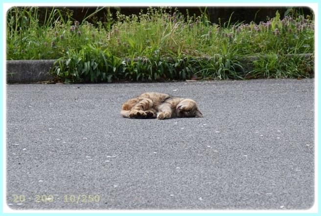 f:id:yasukazu01:20150412223244j:image