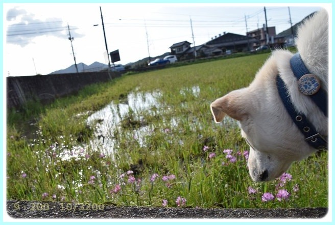 f:id:yasukazu01:20150413224514j:image