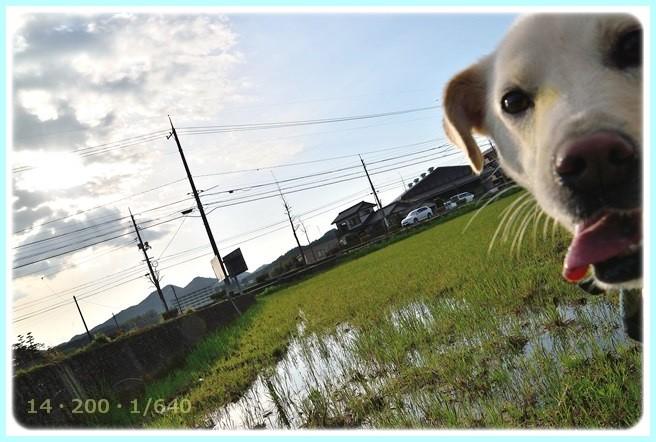 f:id:yasukazu01:20150413224632j:image