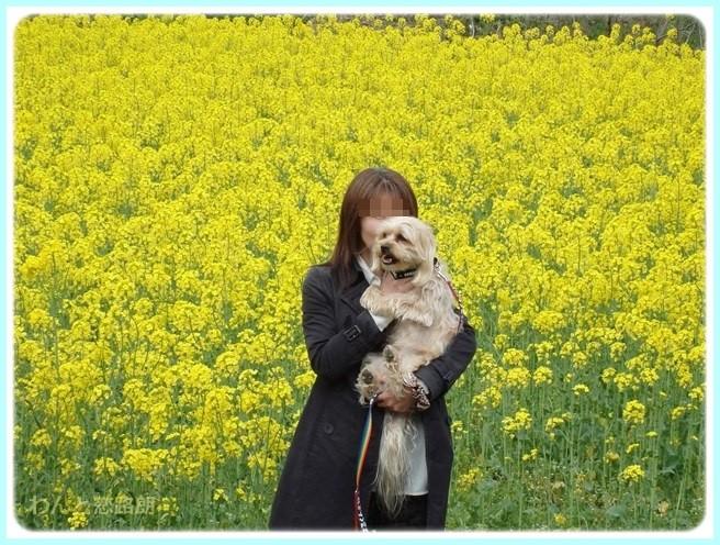 f:id:yasukazu01:20150415102720j:image