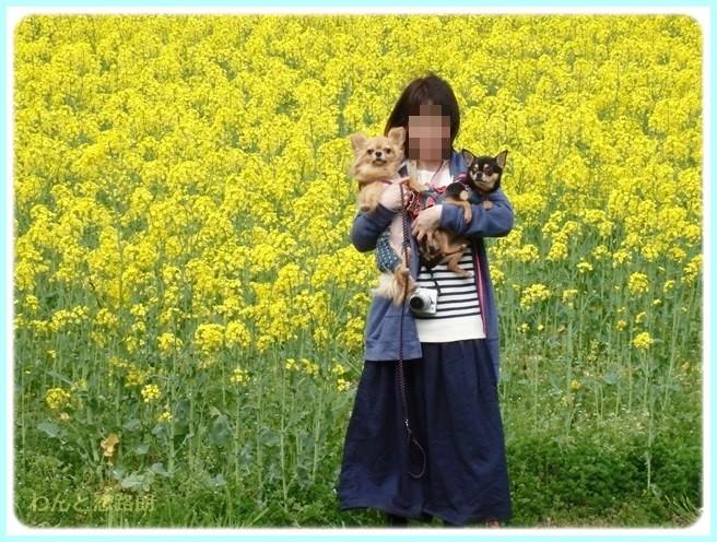 f:id:yasukazu01:20150415102811j:image