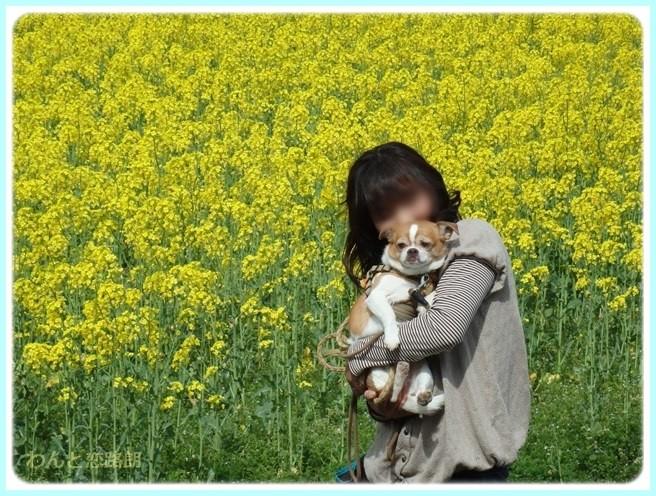f:id:yasukazu01:20150415103255j:image