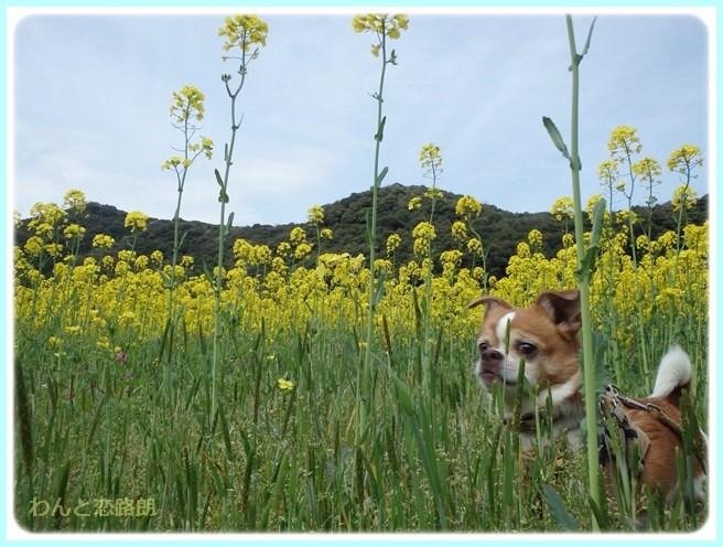 f:id:yasukazu01:20150415104217j:image