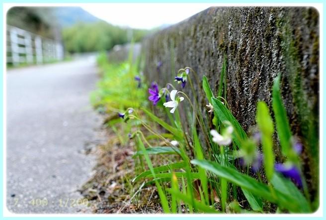 f:id:yasukazu01:20150420211043j:image