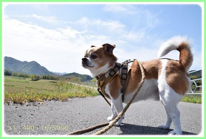 f:id:yasukazu01:20150421203355j:image