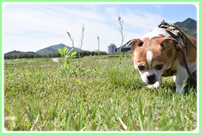 f:id:yasukazu01:20150421204650j:image