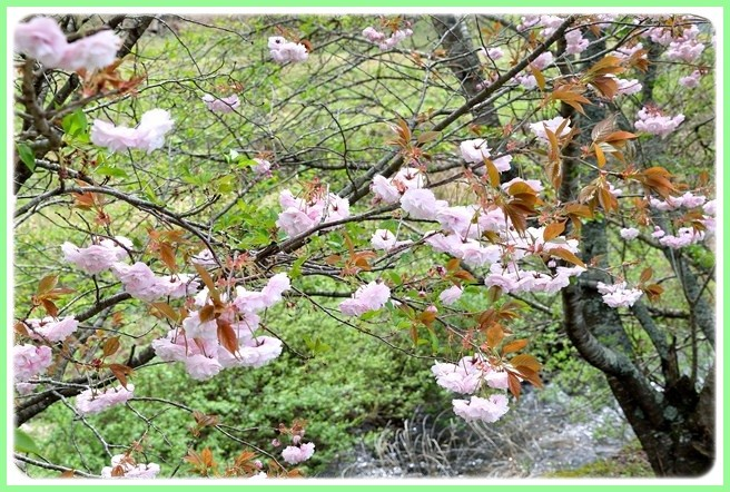 f:id:yasukazu01:20150422104416j:image