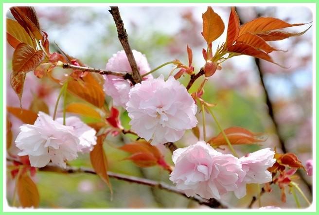 f:id:yasukazu01:20150422104448j:image