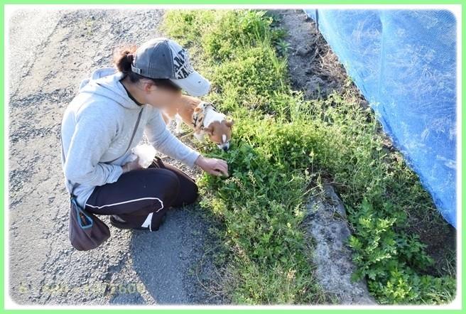 f:id:yasukazu01:20150423223236j:image