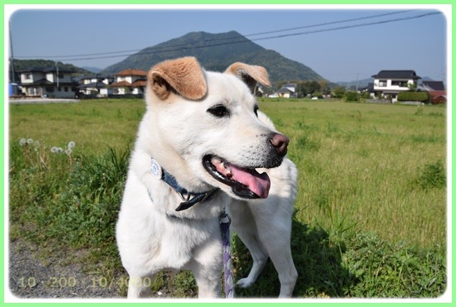 f:id:yasukazu01:20150425203523j:image
