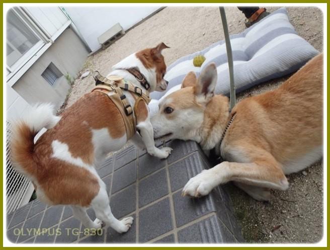 f:id:yasukazu01:20150510232606j:image