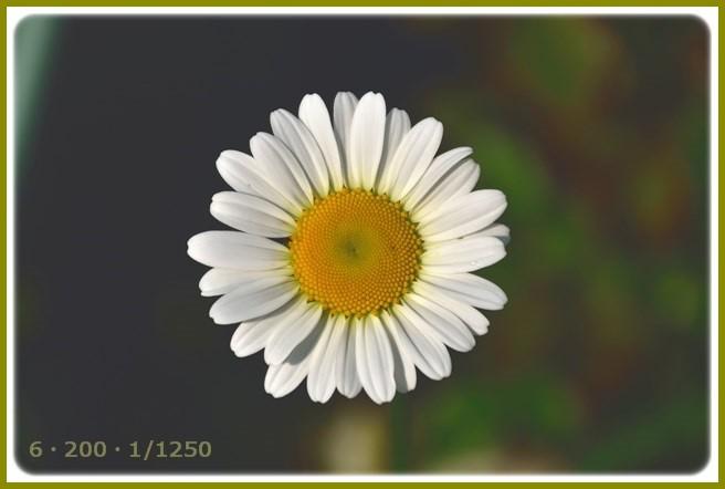 f:id:yasukazu01:20150513224000j:image