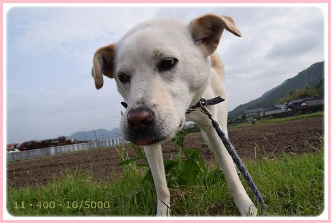 f:id:yasukazu01:20150515211217j:image
