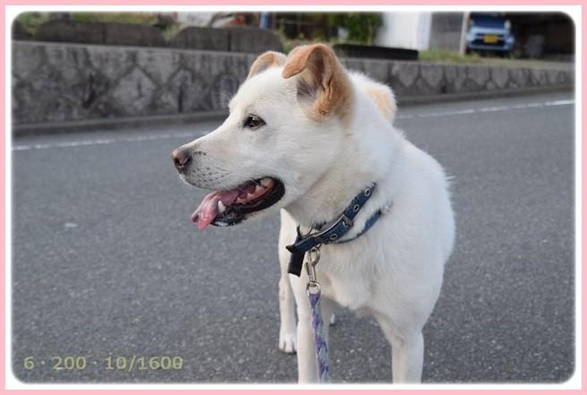 f:id:yasukazu01:20150518224116j:image