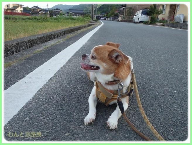 f:id:yasukazu01:20150518225113j:image