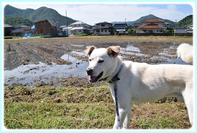 f:id:yasukazu01:20150519204740j:image