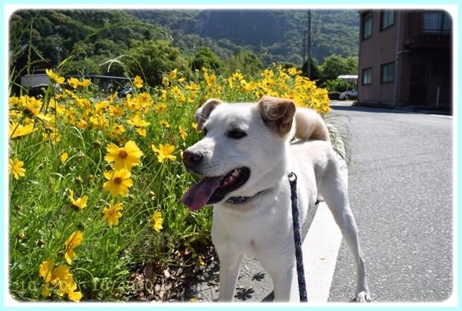 f:id:yasukazu01:20150519204906j:image
