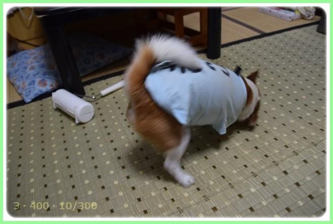 f:id:yasukazu01:20150527225017j:image
