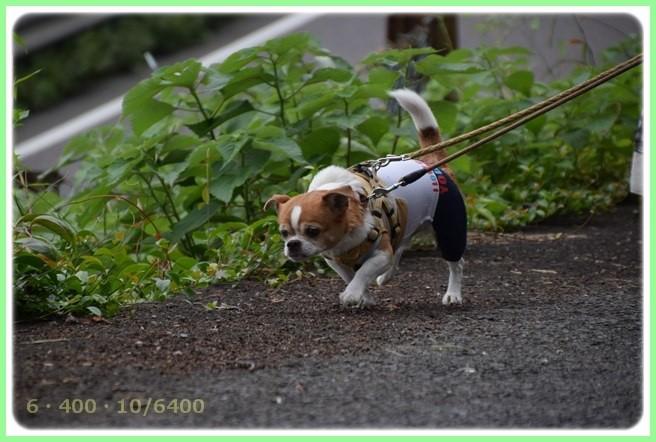 f:id:yasukazu01:20150528201950j:image