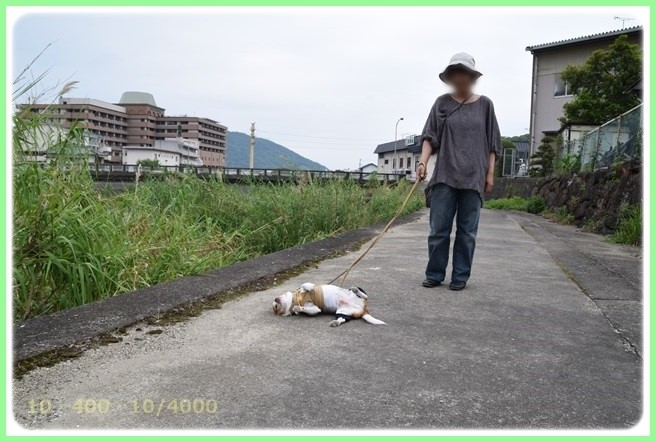 f:id:yasukazu01:20150530195843j:image