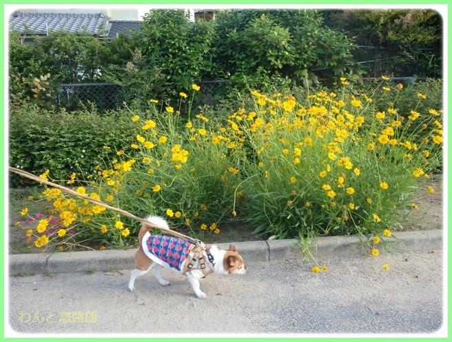 f:id:yasukazu01:20150531225346j:image