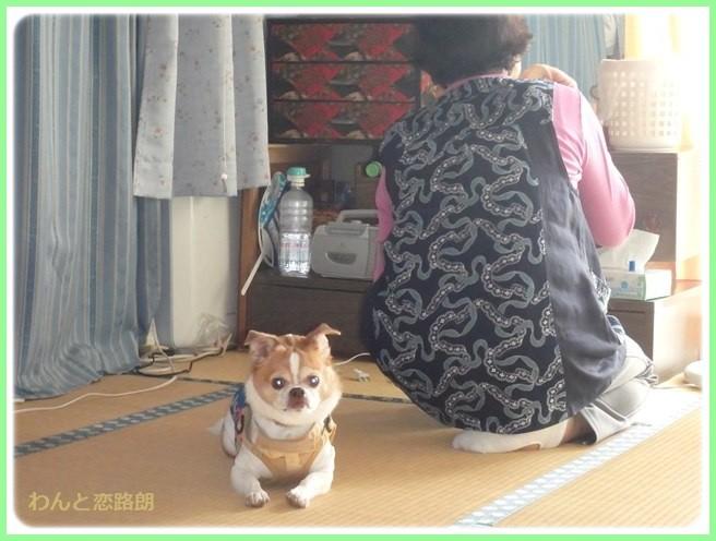 f:id:yasukazu01:20150601205412j:image