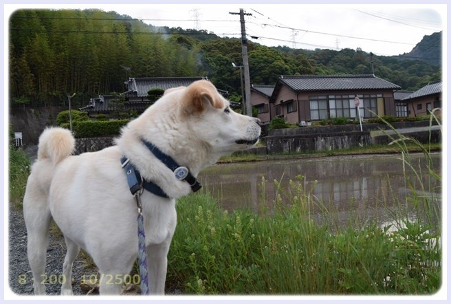 f:id:yasukazu01:20150603225414j:image