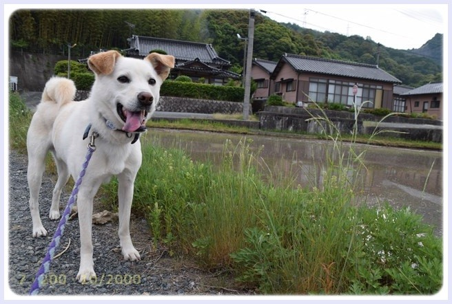 f:id:yasukazu01:20150603225415j:image