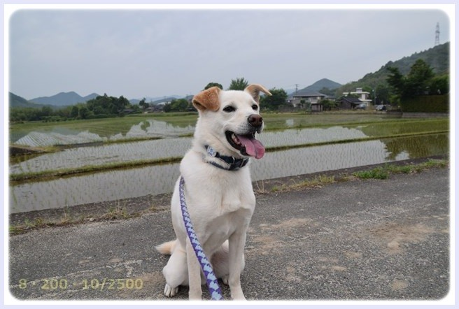 f:id:yasukazu01:20150603230615j:image