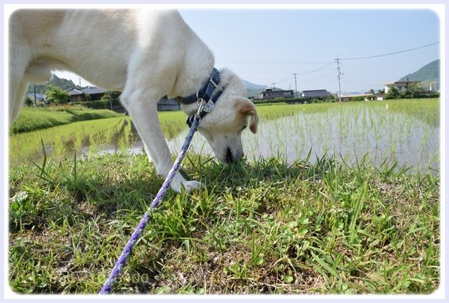 f:id:yasukazu01:20150604213333j:image
