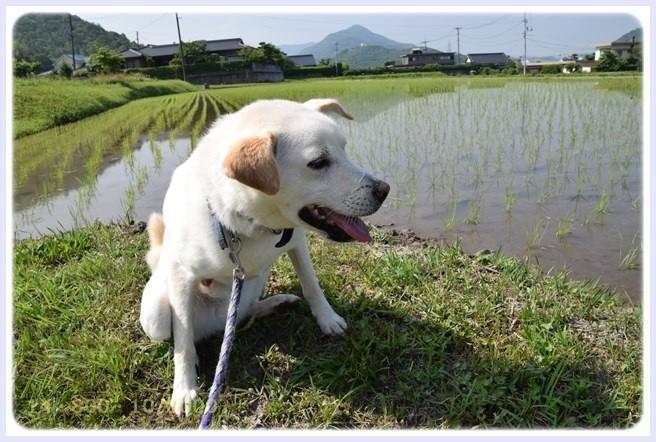 f:id:yasukazu01:20150604221245j:image