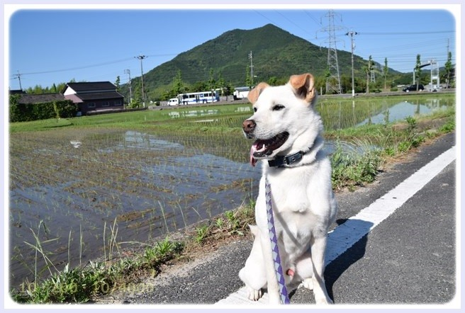 f:id:yasukazu01:20150605220754j:image
