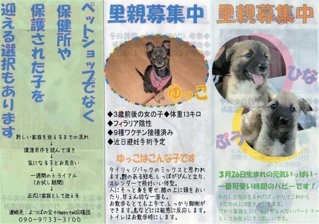 f:id:yasukazu01:20150607205155j:image