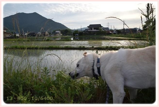 f:id:yasukazu01:20150611215949j:image