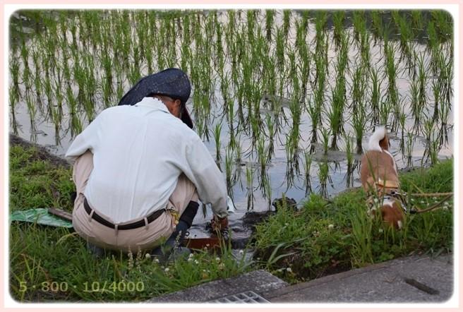 f:id:yasukazu01:20150611220954j:image