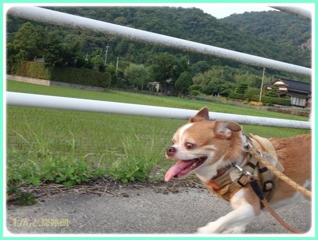 f:id:yasukazu01:20150614225047j:image