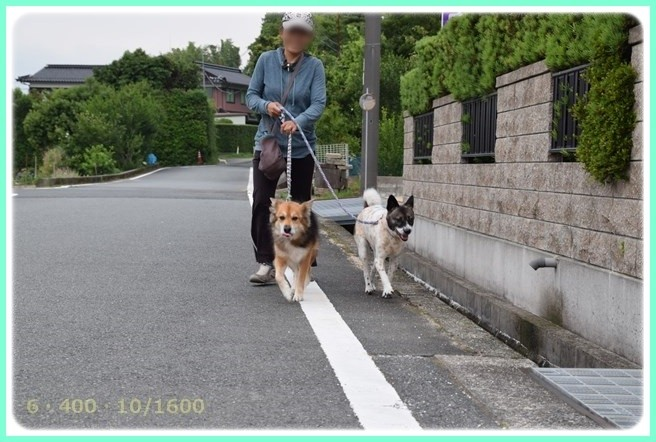 f:id:yasukazu01:20150615205739j:image