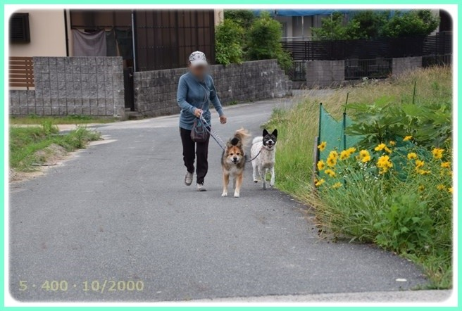 f:id:yasukazu01:20150615210217j:image