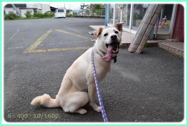 f:id:yasukazu01:20150616230911j:image